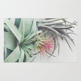 Air Plant Collection II Rug