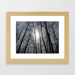 White Sky, Black Trees Framed Art Print