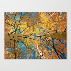 aspens from below Canvas Print