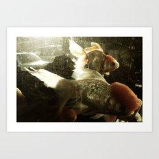 金鱼三 Art Print