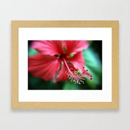 Jamaican Blossom Framed Art Print