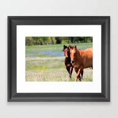 Horses & Bluebonnets II Framed Art Print