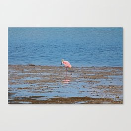 Standing Solo Canvas Print