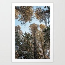 sky trees Art Print