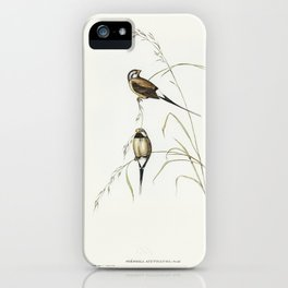 Long-tailed Grass Finch (Poephila acuticauda) illustrated by Elizabeth Gould (1804–1841) for John Go iPhone Case
