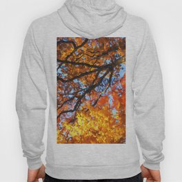 Autumnal colors in forest Hoody