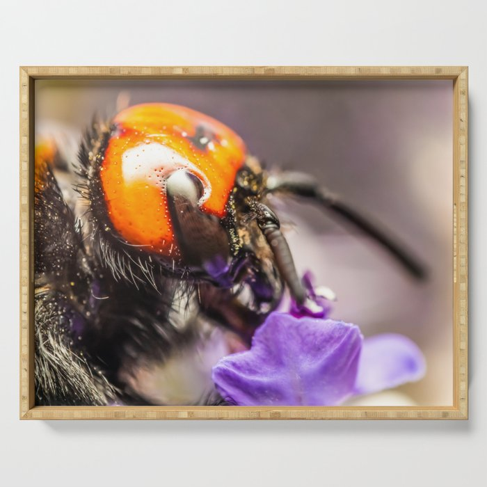 Japanese Giant Hornet, Vespa Mandarinia Japonica, Gathering Flower Pollen, Bee, Insect Macro Photo Serving Tray