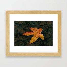 The Leaf Framed Art Print
