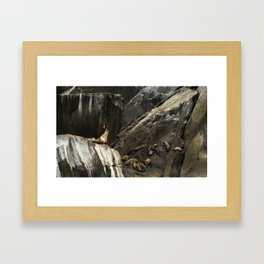 Call of the King Framed Art Print