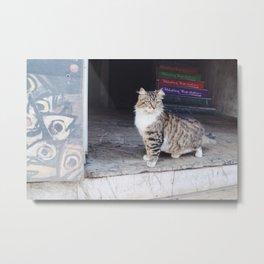 Cats of Istanbul II Metal Print