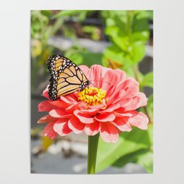 Butterfly and The Flower Poster