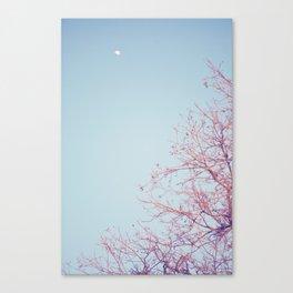 Peek-a-Boo Moon Canvas Print