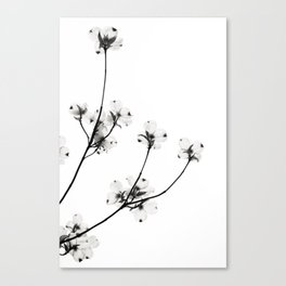 Dogwood Flowers in Black and White Canvas Print