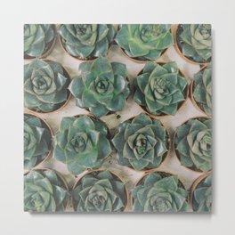 Succulent Collection Metal Print