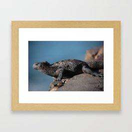 Galapagos Iguana Framed Art Print
