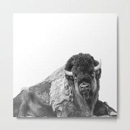 Bison Smile Photography   Black and White   Nature   Animal   Mammal   Minimalism Metal Print