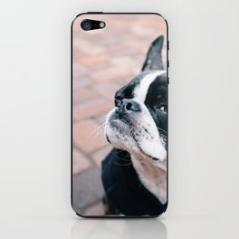 Bruce the Boston Terrier Pug iPhone Skin