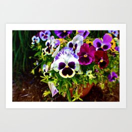Purple Pansy Garden Galore! Art Print