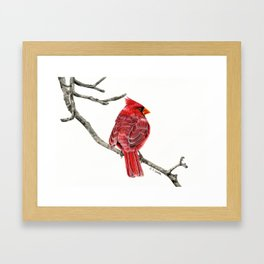 Winter Cardinal On White Framed Art Print