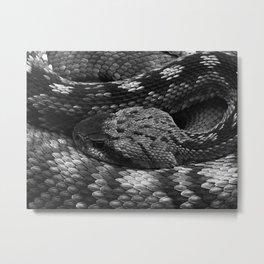 Diamondback Rattlesnake Metal Print