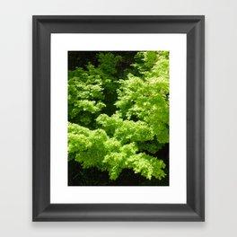 Japanese Maple Green Framed Art Print
