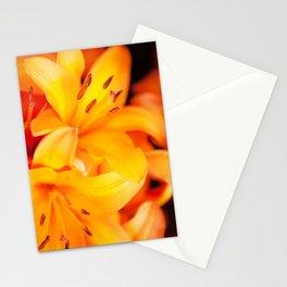 Polleny Stationery Cards