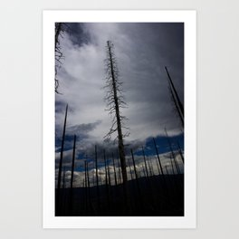 Burned Tree Against Sky Art Print