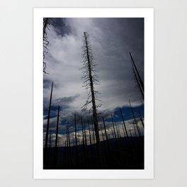 Burned Tree Against Sky Art Print