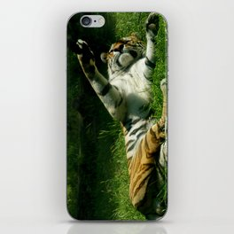 Resting Tiger iPhone Skin