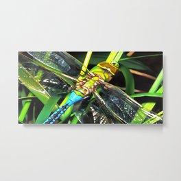 Blue Dragonfly Wings Metal Print