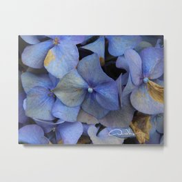 Fall Hydrangeas Metal Print