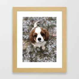 Cavalier Snow Angel Framed Art Print
