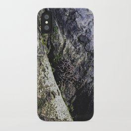Tree Trunk Mushrooms - Nature Photography iPhone Case