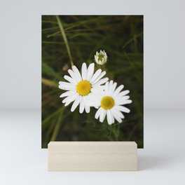 The Daisy In The Middle Mini Art Print