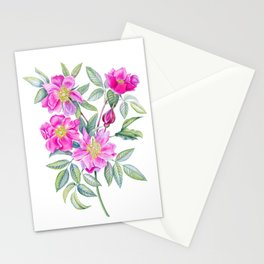 Watercolor handpainted rosehip Stationery Cards