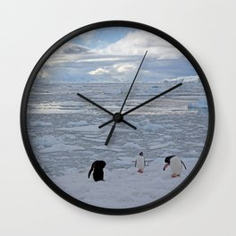 Gentoo Penguins Preening in the Snow Wall Clock