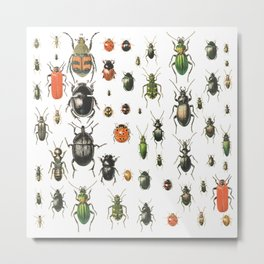 Colors Insects Metal Print