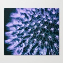 Dandelion Detail Canvas Print