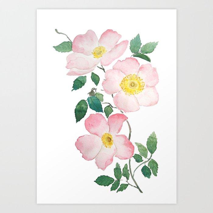 pink rosa rubiginosa watercolor Art Print