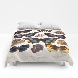 Vintage Scientific Insect Butterfly Moth Biological Hand Drawn Species Art Illustration Comforters