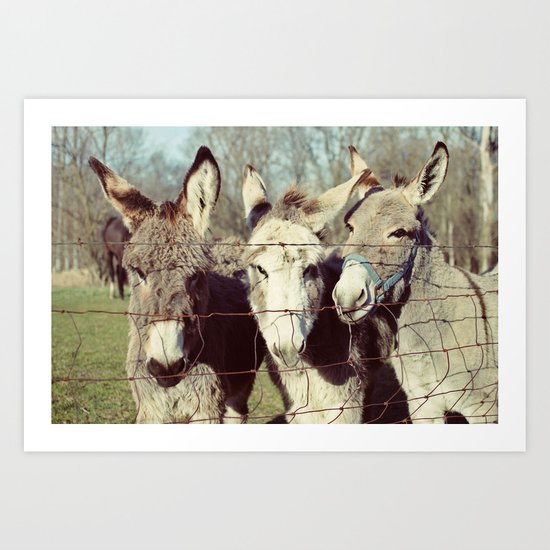 three donkeys Art Print