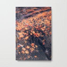 blooming yellow poppy flower field in California, USA Metal Print