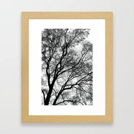 Tree Silhouette Series 1 Framed Art Print
