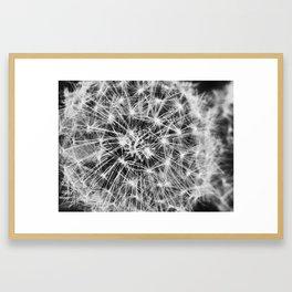 dandelion fireworks Framed Art Print