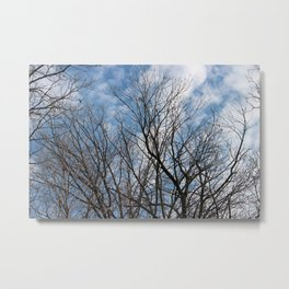 Blue Skies and Bare Branches Metal Print