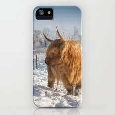 Blonde Highland Cow iPhone (5, 5s) Slim Case