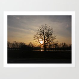 Ixonia Marsh Art Print