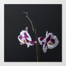ultra violet orchid Canvas Print
