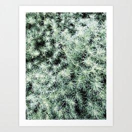 35  | Plants Photography | 200630 | Art Print