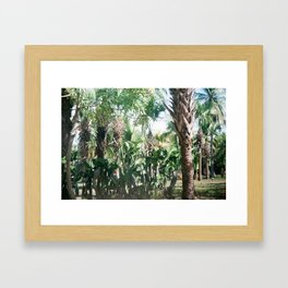 Mexican Palms Framed Art Print